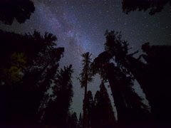 6K Astro Timelapse Low Angle Shot of Star Trails over Giant Sequoia  Stock Footage