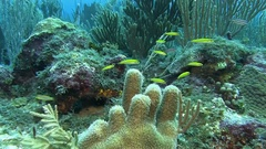 Fish on the reef in Caribbean sea Stock Footage