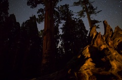 5K MoCo Astro Timelapse Tracking Shot of Stars over Grant Grove in Sequoia  Stock Footage