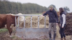 4K Farmer with vet out in the field, checking on herd of cattle Stock Footage