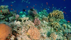 Floating over a lively coral reef with a lot of fish Stock Footage