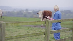 4K Farming vet with clipboard out in the field, checking on cattle Stock Footage