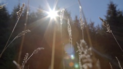 Flare on Plant in Forest Stock Footage
