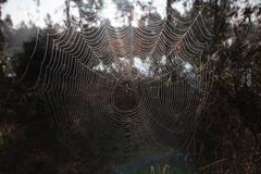 Intricate spider web Stock Photos