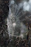 Intricate spider web Stock Photos