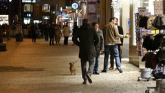 People walk with little leashed pet dog in public city center of Vienna Stock Footage