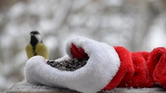 Birds pecking seeds in the winter for Christmas. On the snowy background. Close Stock Footage