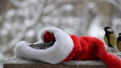 Birds pecking seeds in the winter for Christmas. On the snowy background and Stock Footage