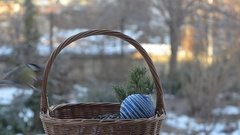 Birds pecking seeds out of a wicker basket with Christmas decorations Stock Footage