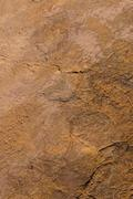 Dinosaur footprints on stone Stock Photos