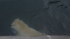 Polar bear with toy swimming under water Stock Footage
