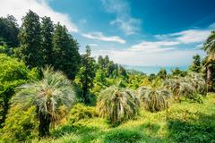 Beautiful Spring Tropical Garden Or Forest Woods. Nobody. Summer Stock Photos