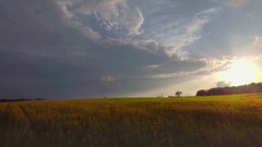 Grassland meadow golden green grass field horizon cloudy sky sunlight sunset sun Stock Footage
