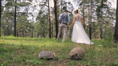 Newlyweds walk on wood holding hands near sweet hedgehogs Stock Footage