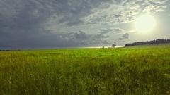 Flatland grassland meadow green grass field horizon cloudy sky sunlight sun Stock Footage