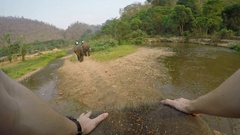 4K Top view of Asian elephant while a tourists group ride through the river-Dan Stock Footage