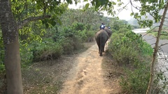4K Top view of Asian elephant while a tourists group ride through the forest-Dan Stock Footage