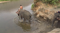 4K Mahouts men ride asian elephants to the river of tropical forest Thailand-Dan Stock Footage