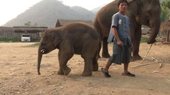 4K Mahout feeding to the asian elephant and baby in camp of tropical forest-Dan Stock Footage