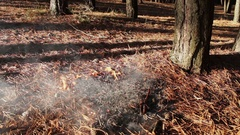 Forest ground fire under pine tree Stock Footage