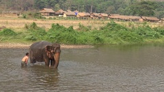 4K Mahout man washing and bathing his elephant in the river of Thailand -Dan Stock Footage