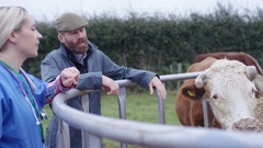4K Farmer with vet checking on cattle herd in the field Stock Footage