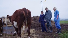 4K Farming couple talking to vet & checking on cattle herd out in the field Stock Footage