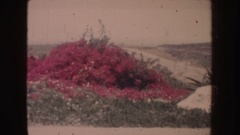 1962: plants in different hues and textures in the landscape CALIFORNIA Stock Footage