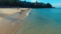 Aerial: Two dogs playing on the beautiful beach. Stock Footage