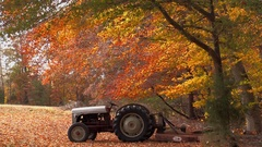 Wind blows autumn leaves 1950s ferguson tractor Arkistovideo
