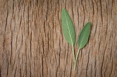 Fresh sage leaf on rustic wooden background. Sage Benefits Anti-inflammatory Stock Photos