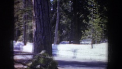 1957: ponderosa pine and fir forest adjacent to a ravine and a sign that says Stock Footage