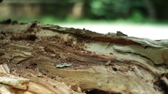 Breakpoint both of the fallen tree Closeup Stock Footage