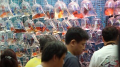 MS Group of people looking at fish displayed in plastic bags on wall in market / Stock Footage