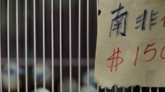 CU R/F Group of birds in cage / Hong Kong, China Stock Footage