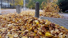 A large number of yellow leaves blowing in air with a leaf blower Arkistovideo