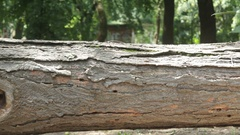 See the horizontal movement of a fallen tree Stock Footage