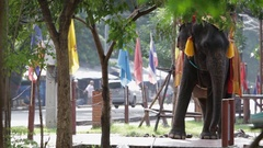 WS Decorated elephant / Thailand Stock Footage