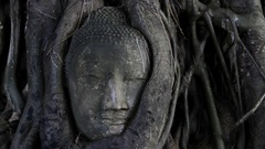 CU Face of stone Buddha in tree / Ayutthaya, Thailand Stock Footage