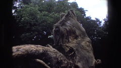 1969: monkeys on top of giant rock observing things from their perch SOUTH Stock Footage