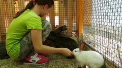 Little girl feeding decorative rabbits and communicates with them stock footage Stock Footage