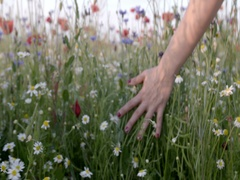 Woman's hand running through poppies field in Slow motion shot. Stock Footage