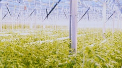 Friendly farmer at work in greenhouse. Aerial view Stock Footage