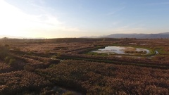 Aerial shot, fly over marshy landscape in europe, made with drone Stock Footage