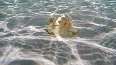 Seashell under water Stock Footage