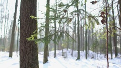Snowy forest, Christmas tree, Dolly Stock Footage