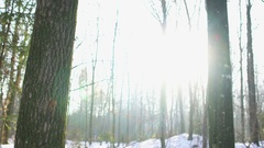 Sun in the snowy woods, Dolly Stock Footage