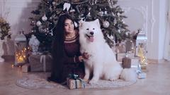 Beautiful girl playing and having fun with dog Samoyed near the Christmas tree Stock Footage