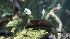 Exotic marine fish in the aquarium Stock Footage