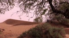 MS Sand dunes and vegetation in desert Stock Footage